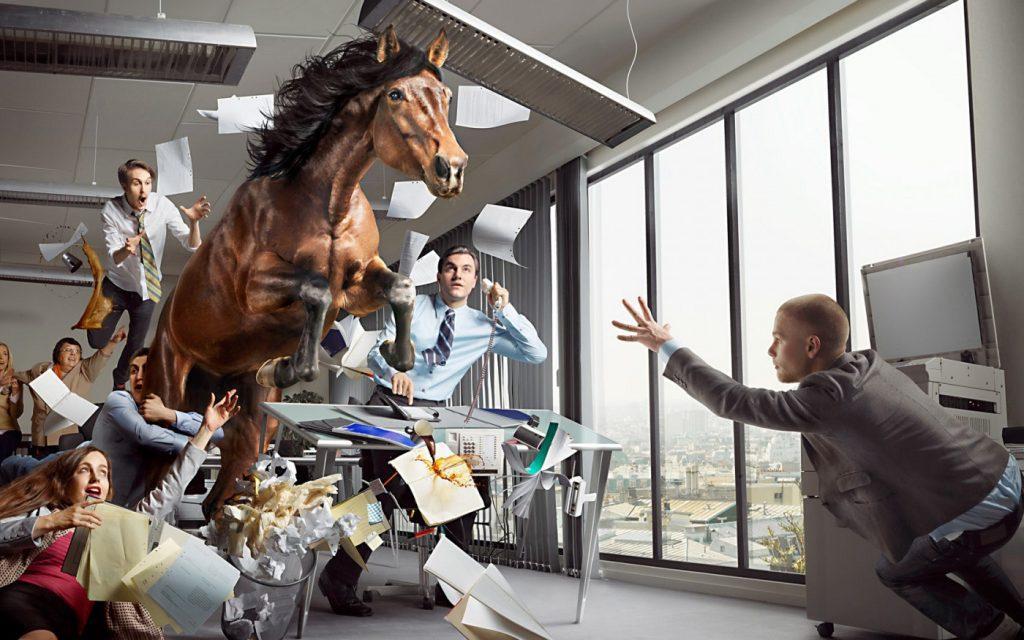 Sven Prim Galleria Cavallo Ufficio